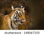 ranthambhore tiger | Shutterstock . vector #148067153