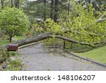 A Large Oak Tree Fallen Across...