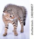 small scottish straight kitten... | Shutterstock . vector #148248857