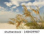 Close Up Of Sea Oats On A...