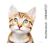 Stock photo cute kitten looking up 148468727