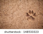 Dog Footprint On The Earth