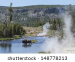 Bison In Yellowstone River ...