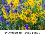 Yellow And Blue Wildflowers In...