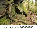 Mossy Rock Ledge With A Tree...