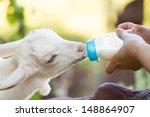 A White Baby Goat Against Milk