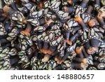 a fresh bunch of barnacle a... | Shutterstock . vector #148880657
