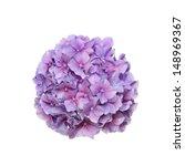 Mop Head Hydrangea Flower...