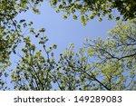 Treetops With A Blue Sky