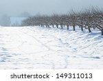 Snowy Fruit Trees  Sunshine