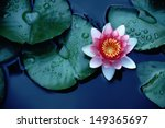 This Beautiful Waterlily Or...