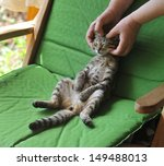 tabby cat in the hands of the... | Shutterstock . vector #149488013