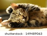 Stock photo striped cat with long whiskers expressive 149489063