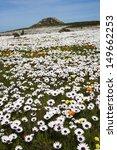 spring wild flowers  west coast ... | Shutterstock . vector #149662253
