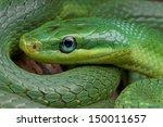 Постер, плакат: Emerald rat snake