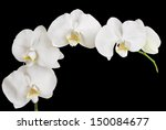 White Orchid Isolated On Black