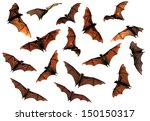 spooky halloween flying fox... | Shutterstock . vector #150150317