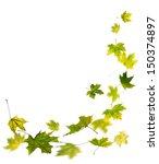 maple green autumn falling...   Shutterstock . vector #150374897