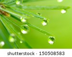 Image Of Fir Branches With...