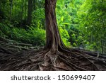 Big Tree In Forest. Green Life...