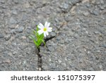 Solitary Flowers On The Street