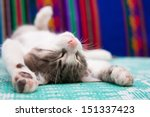 Stock photo small kitten sleeping on the bed 151337423
