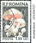 "Small photo of ROMANIA - CIRCA 1958: A stamp printed in Romania from the ""Mushrooms"" issue shows Field mushroom (Agaricus campestris), circa 1958."