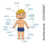 parts of boy body   insert...   Shutterstock .eps vector #151420367