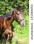 horse eating grass | Shutterstock . vector #151584053