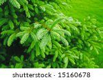 Brightly Green Prickly Branche...