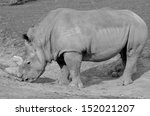 Постер, плакат: Rhinoceros also known as