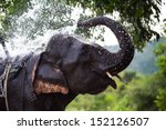 Asia Elephant In Thailand