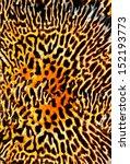 Seamless Tiger Pattern...