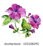 Watercolor Purple Petunia...