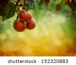 Fruit Background. Apples In...