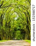 trees | Shutterstock . vector #152588717