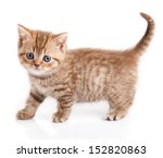 Stock photo kitten on a white background 152820863