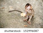 Baby Monkey Eating Fruit