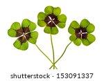 Three Four Leaf Clovers ...