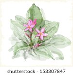 frangipani flower  plumeria .... | Shutterstock .eps vector #153307847