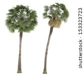 palm plant tree isolated.... | Shutterstock . vector #153323723