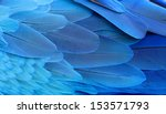 blue and gold macaw wing... | Shutterstock . vector #153571793