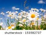 Summer Field With White Daisie...