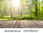 Empty Space Of Green Forest An...