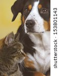 Stock photo  cat and dog 153801143