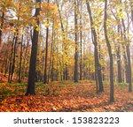 Beautiful Colorful Autumn Park...