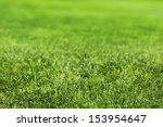 beautiful green grass texture | Shutterstock . vector #153954647