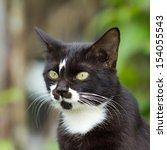 Black Cat  White Long Beard...