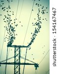 Small photo of Birds on a high power wires which flying together create a wonderful illusion of disintegration wires