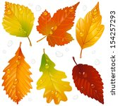 vector autumn leaf set isolated ... | Shutterstock .eps vector #154257293